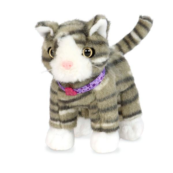 American Shorthair Kitten_BD37738_amerykanski_krotkowlosy